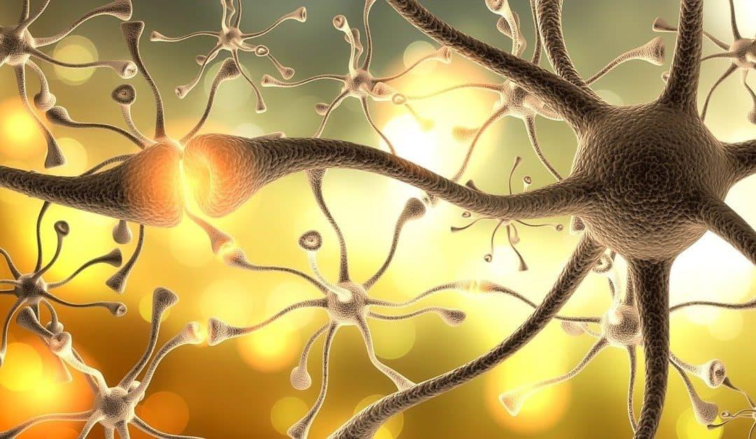 Perte de neurones