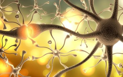 Est-ce qu'on perd la mémoire quand on perd ses neurones ?