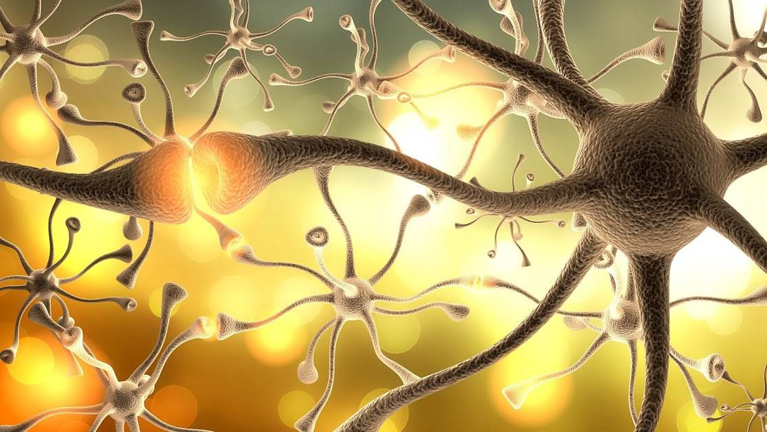 Est-ce qu'on perd la mémoire quand on perd ses neurones