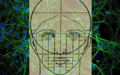 205 neurones suffisent pour coder votre visage. Et pour le reconnaître?