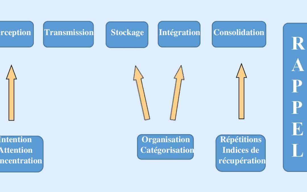 Le processus complet de la mémoire [infographie]