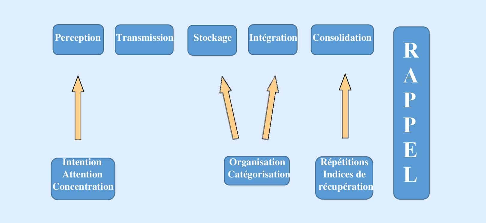 Le processus complet de la mémoire (infographie)