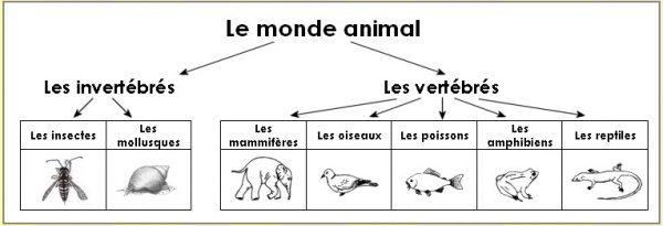 Un excellent plan de récupération: classement des animaux