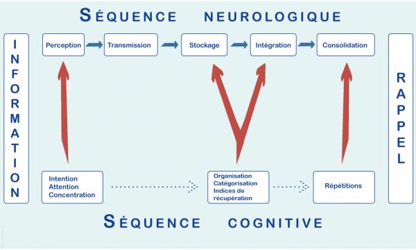 La mémoire comment ça marche (Infographie)