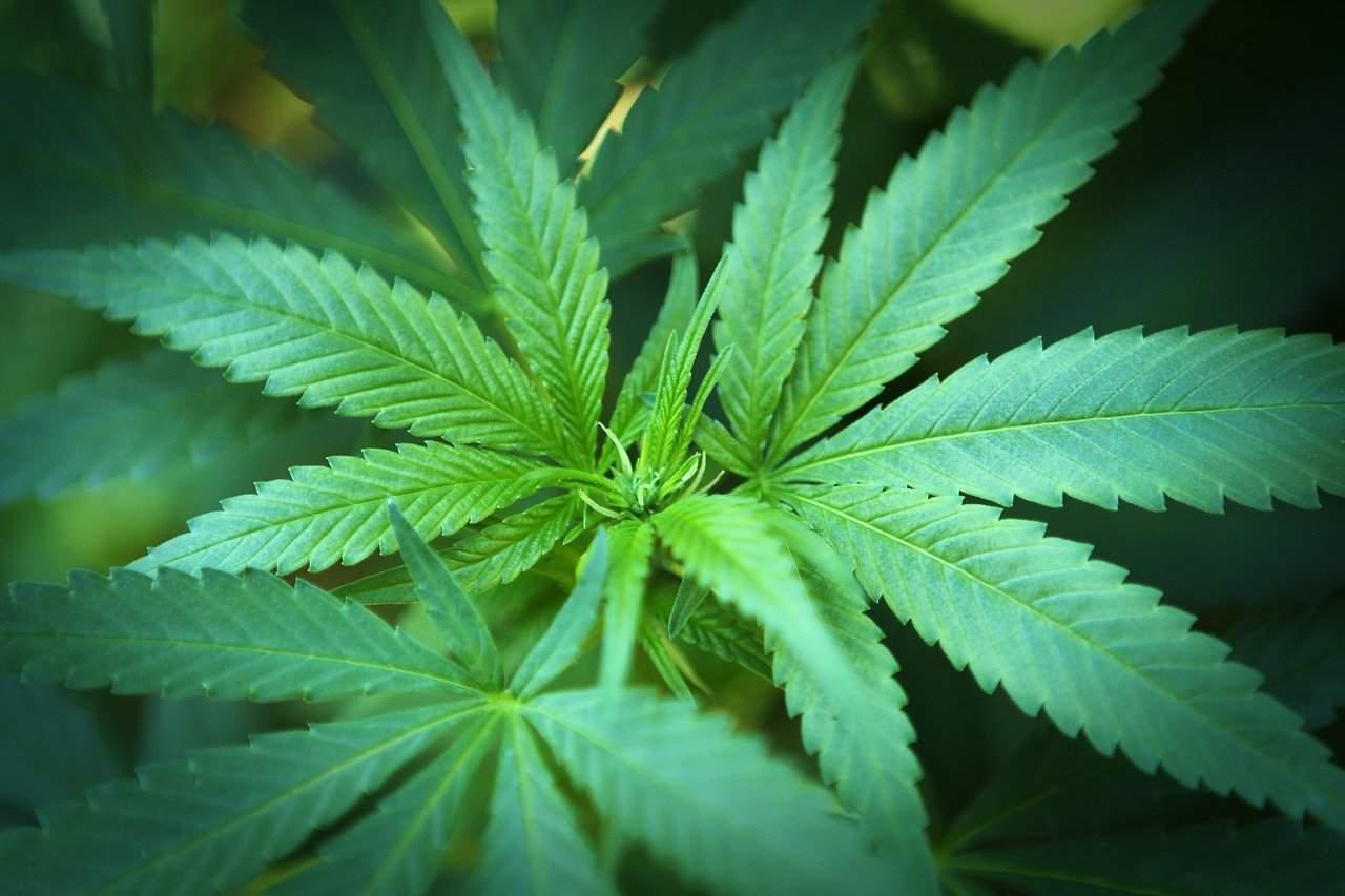 Mémoire: le cannabis rend-t-il nos souvenirs plus flous ?